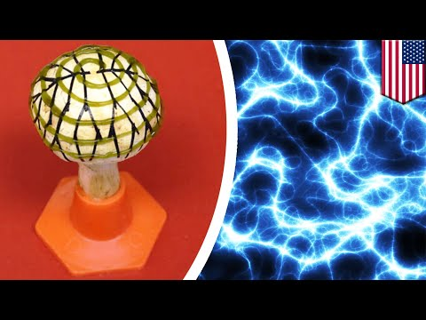 'Power mushroom' turns light into clean energy - TomoNews