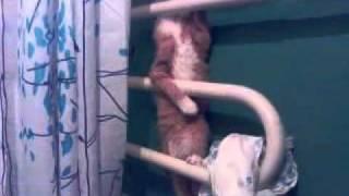 Кот в ванной ползает по батарее :)