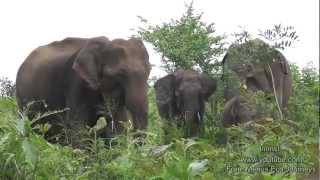 Nature Trees And Birds - Elephants