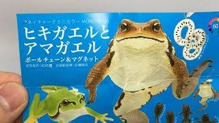 Japanese Frog magnet-ヒキガエルとアマガエル(ボールチェーン&マグネット))