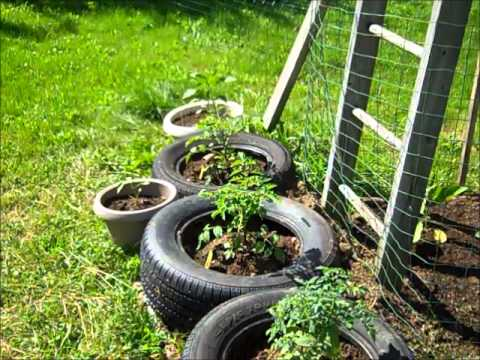 Urban Homesteading in Auburn Maine