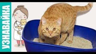 Главные причины почему кошка не может сходить в туалет! Узнавайка