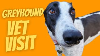 Greyhound at the vet!