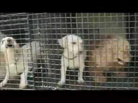 Orange County Conservatives Restore COMPANION'S FEDERAL 1966 AWA PROTECTION- CLOSE THE PUPPY MILLS!