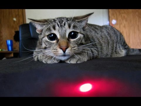 Cats vs Laser Pointers Compilation 2016