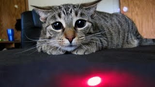 Cats vs Laser Pointers Compilation