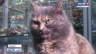 В Крыму отметили День кошек