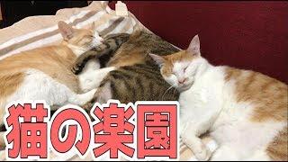 【家族愛】引っ付いてイビキかきながら寝る猫たちが可愛すぎる!