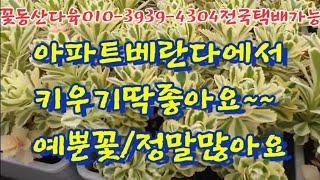 아파트베란다/키우기딱좋은/예뿐꽃  꽃동산다육010-39…