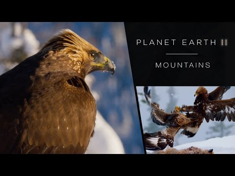 Golden eagle fight - Planet Earth II: Mountains Preview - BBC One