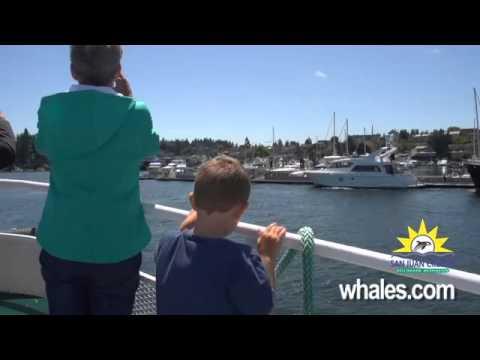 San Juan Cruises - Whale Watching Adventure Cruise