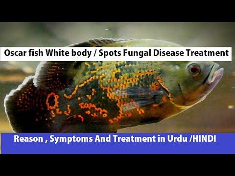 Oscar Fish White Spot/body Disease | Oscar Fish Disease Treatment|