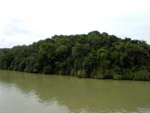 Panama Canal - 1. Jungle