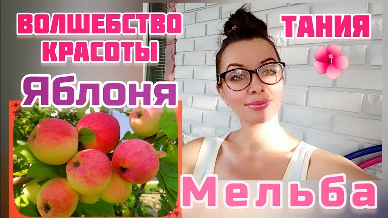 ЯБЛОНЯ *МЕЛЬБА*- душистые и вкусные яблоки