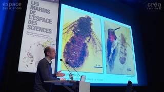 [Vincent Perrichot] L'origine et l'essor des fourmis