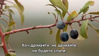 Цвіте терен - Наташа Королева, Диана Гурцкая, Анастасия Спиридонова, Зара (Subtitles)