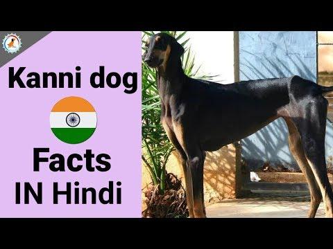 Kanni dog facts in hindi / Kanni Dog Facts | Hindi | INDIAN DOG BREEDS | At Mix