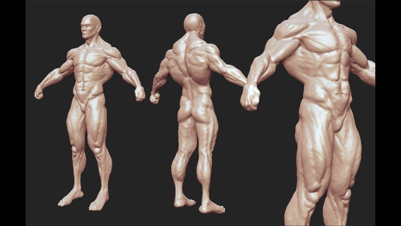 Male anatomy study - YouTube