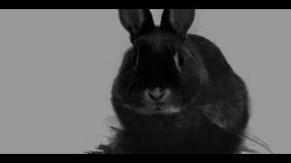 115. Un Simple Conejo Negro