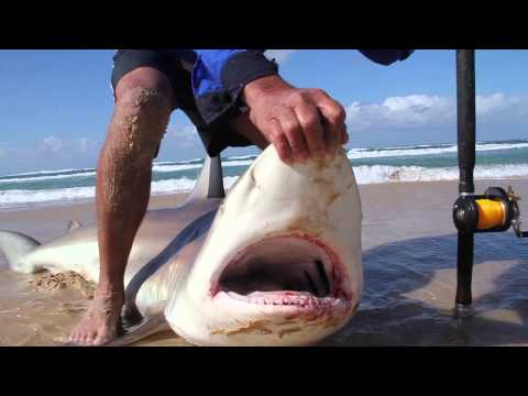 FRASER ISLAND 2014 - HUGE SHARKS & SPANISH MACKEREL OFF THE BEACH!