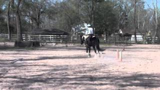 Dressage Horse, Draft/TB Cross Thumbnail