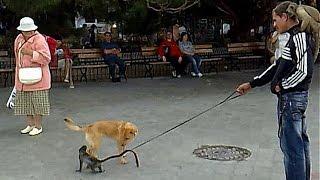 Пол собаки. Как определить?