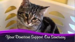 Caroline's Kids Cat Rescue - We're Pawsitively Amazing