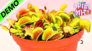 Fleischfressende Pflanze frisst Käse | Venus Fliegenfalle füttern | Falle schnappt zu