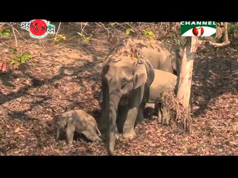 Nature and Life   Episode 33 Endangered Wildlife of Bangladesh 01