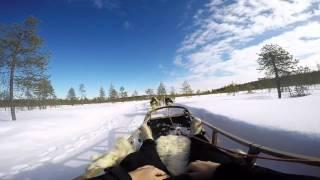 Husky safari in Rovaniemi, March 2016.
