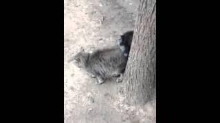 Два кота любят друг друга...