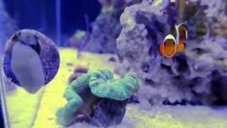 reef tank clips 10g nano reef tank