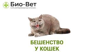 Бешенство у кошек. Ветеринарная клиника Био-Вет.
