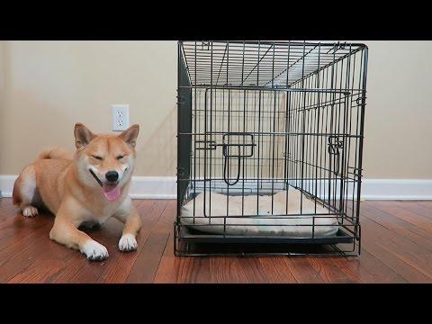 Do Shiba Inu's Like Crates?