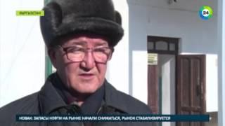 Школьники в Кыргызстане мерзнут из за жадности водителей   МИР24