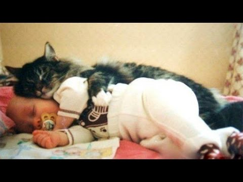 Cats and babies cuddling – Cute cat and baby compilation