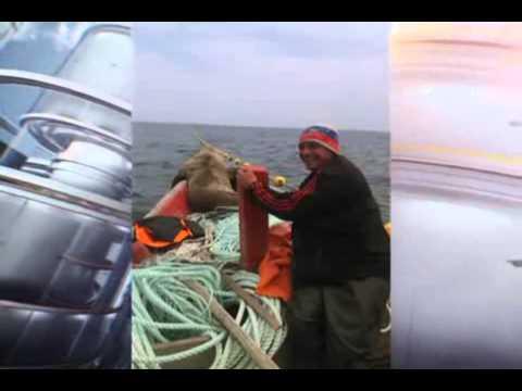 морской котик запрыгнул в лодку спасаясь от касаток