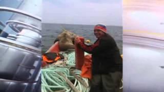 Морской котик весь день катался в лодке с сахалинскими рыбаками