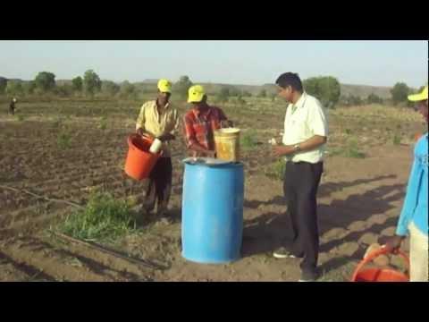 Shantiniketan.com ORGANIC POMEGRANATE FARMING