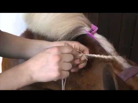 Plaiting for showing -- PONY Mag