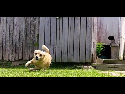 Chihuahuas Launching