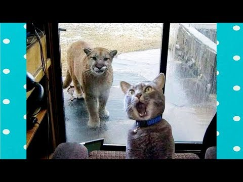 Fun and Fails! Who Says Cats And Animals Can't Be Best Friends?
