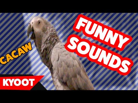 The Funniest Animal Noises Home Videos of 2016 Weekly Compilation | Kyoot Animals