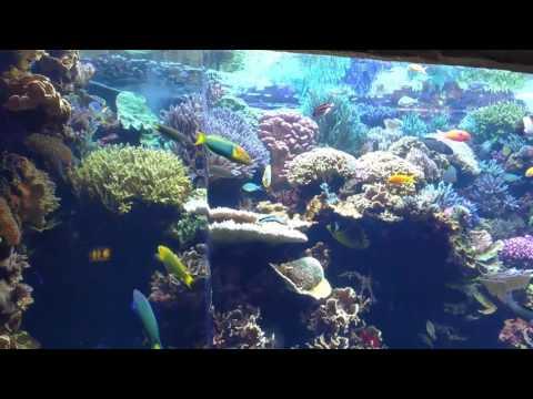 Fun times at Denver Aquarium(9)