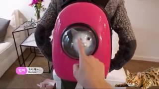 видео Рюкзак переноска для собак