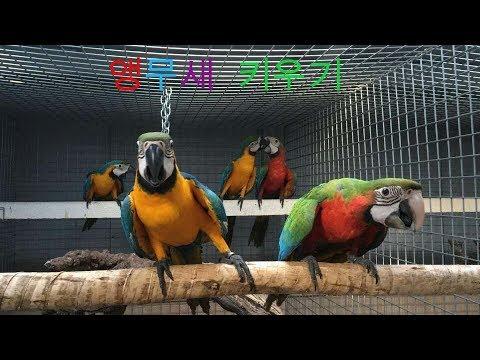 앵무새를 잘 키우려면 13 (앵무새를 이런 곳에 키우면 안된다) (You should not raise parrots In this place.)