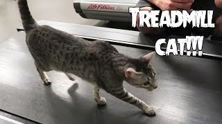 cat uses treadmill