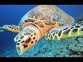 Underwater life of Red Sea november 2017
