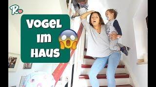 Ein Vogel im Haus  - Papas Geburtstag - #Vlog 1044 Rosislife