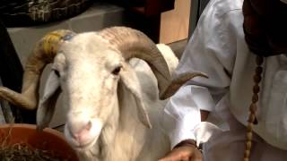 A MUST WATCH Ram that understands English and Follow GPS